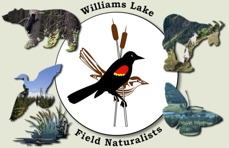 Williams Lake Field Naturalists